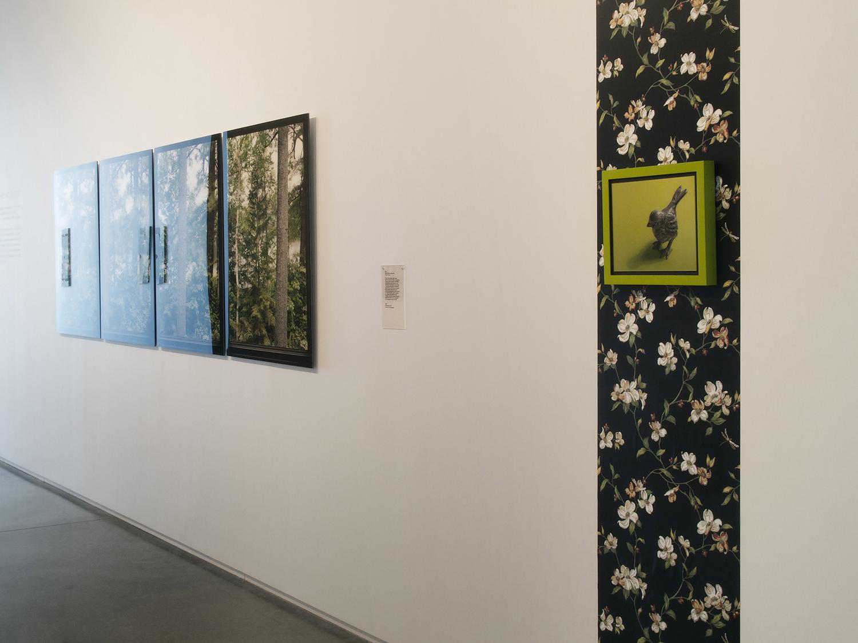 Maine Center for Contemporary Art 2016