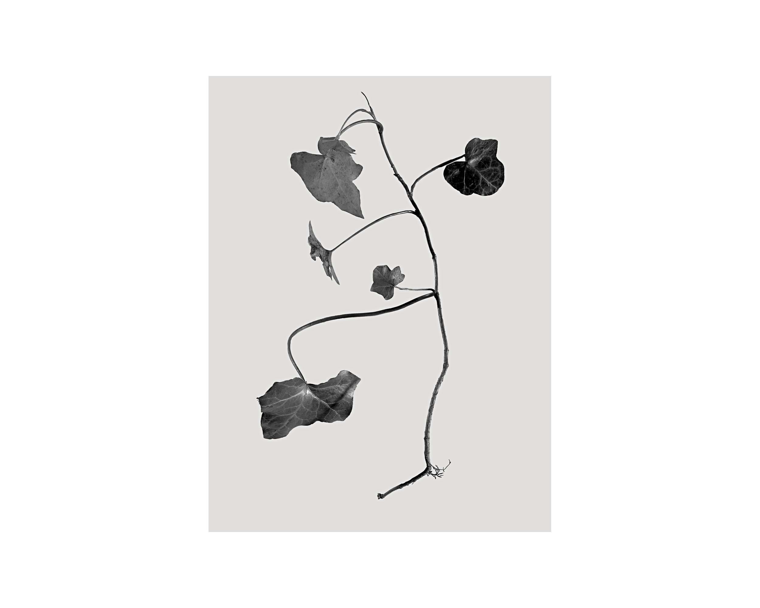 Growth-16.jpg