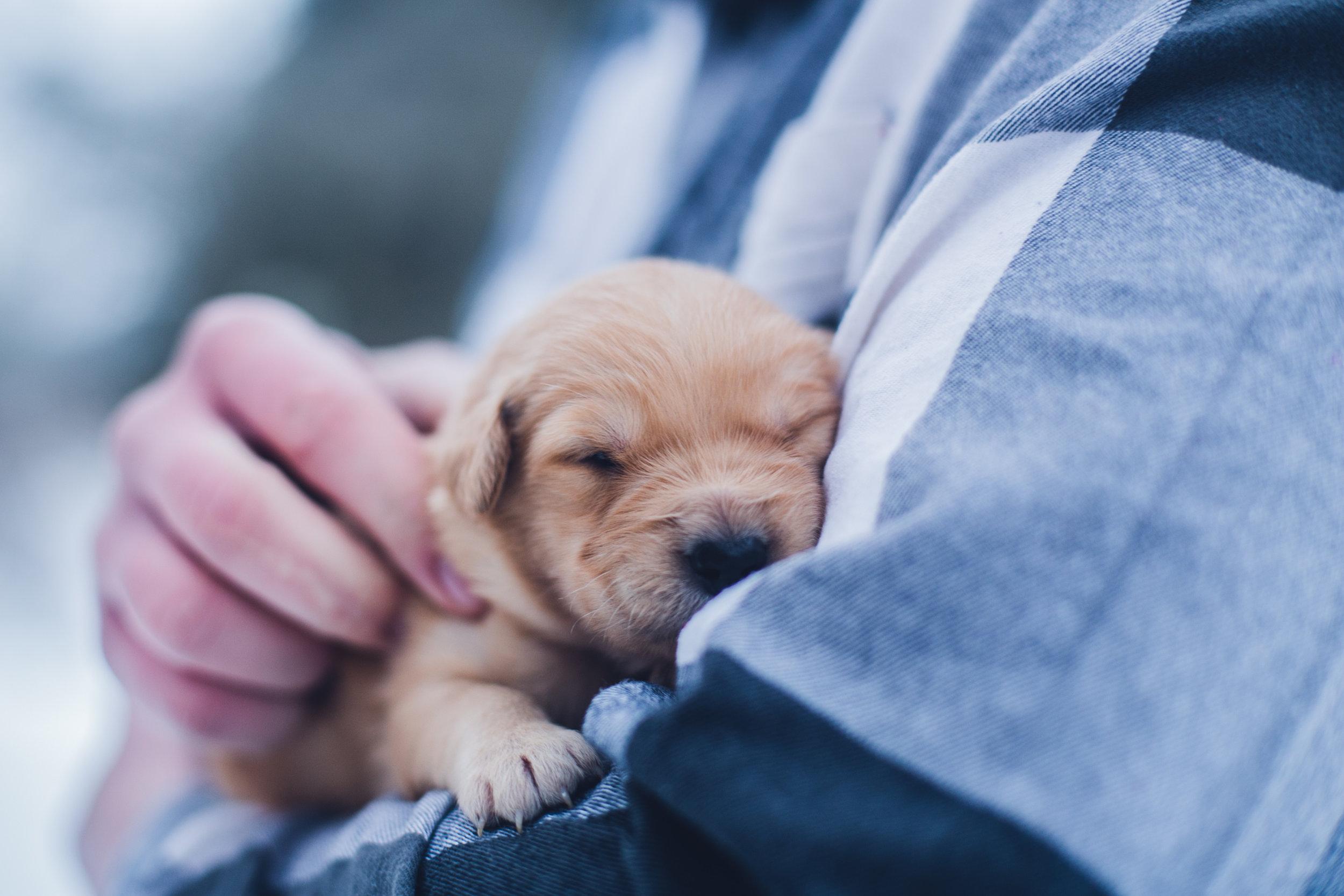 volunteer animal shelter puppy