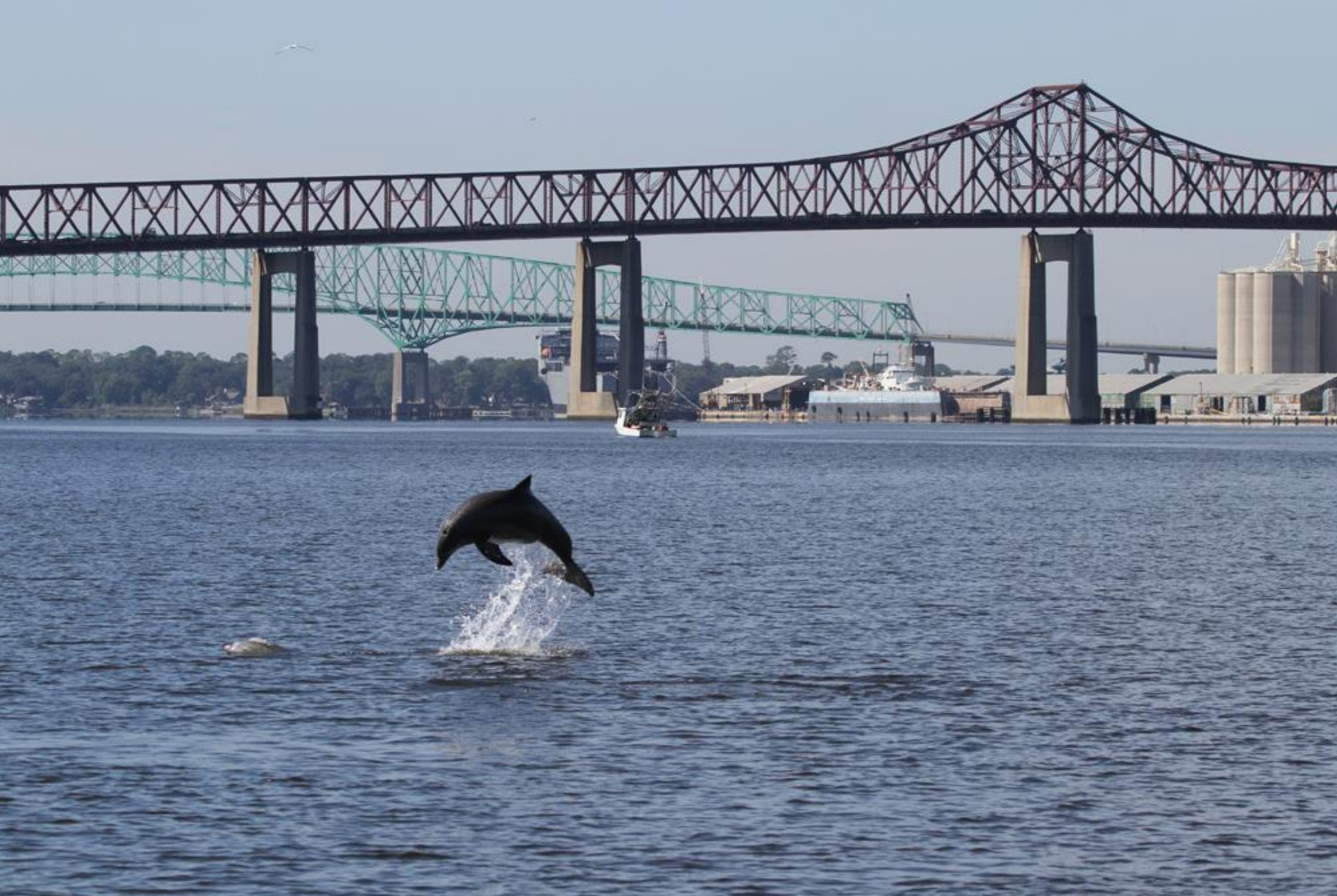 Five Points Events Science and History Tours St. John's River
