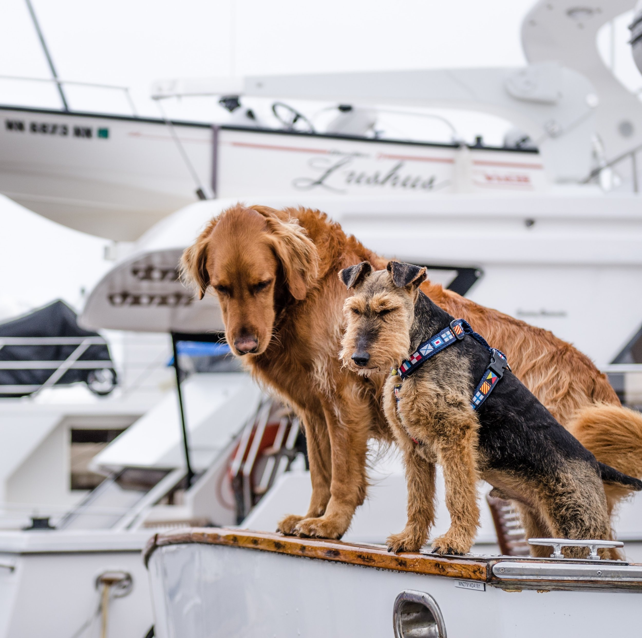 amelia island dog friendly activities charter