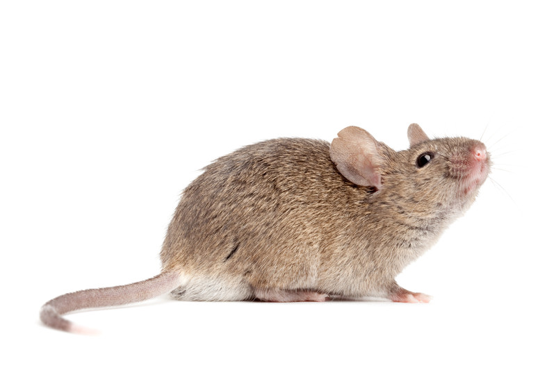 Follow these tips from Castle Doctor in Plano, Texas to keep pest and rodents out of your home!
