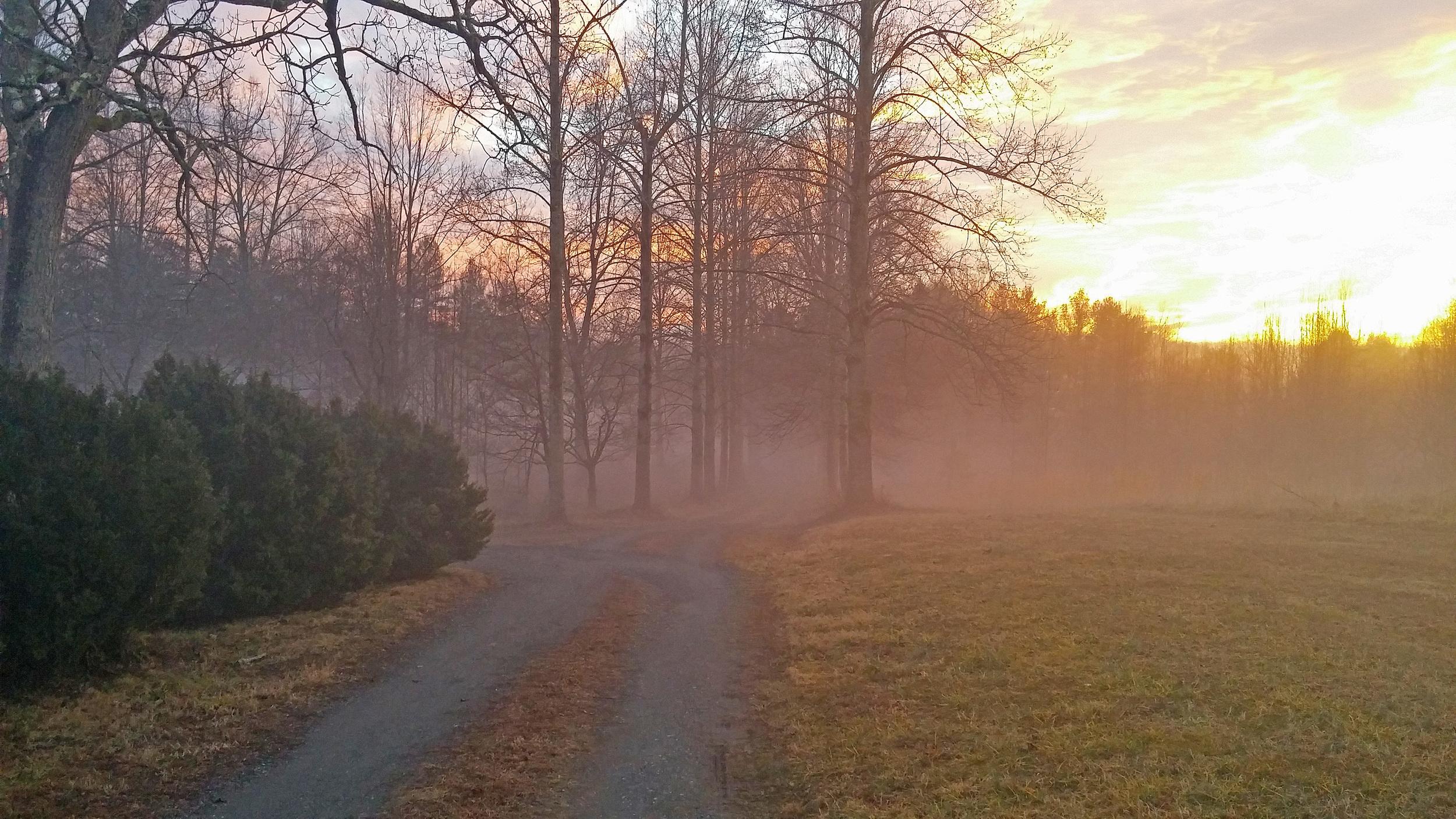 foggy farm4.jpg