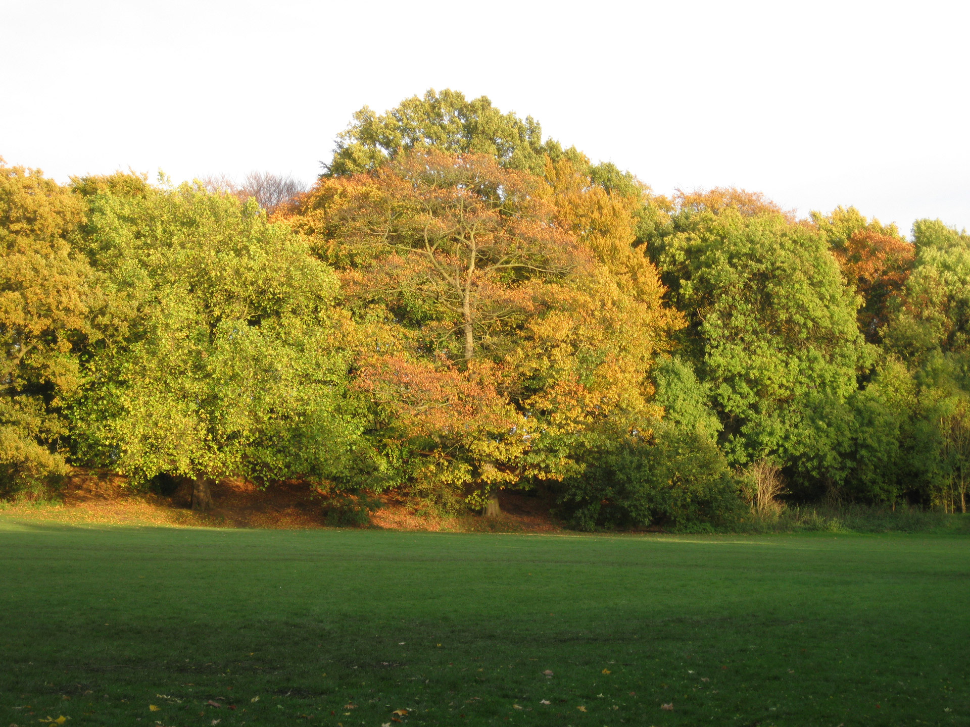 hampstead-heath-londres.jpg