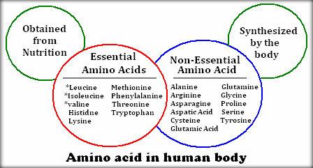 Photo source:  http://chemistry.tutorvista.com/biochemistry/amino-acids.html