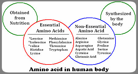 Not all protein sources are equal with respect to satisfying amino needs.  photo Source