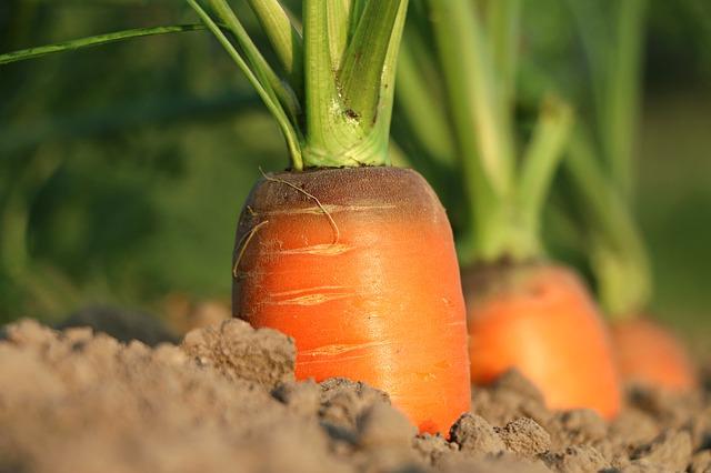 Plant A Garden -