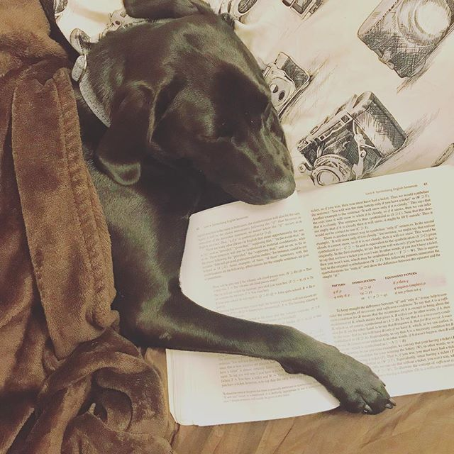 Nothing like spending #friday night with a good #book. #dogs #pups