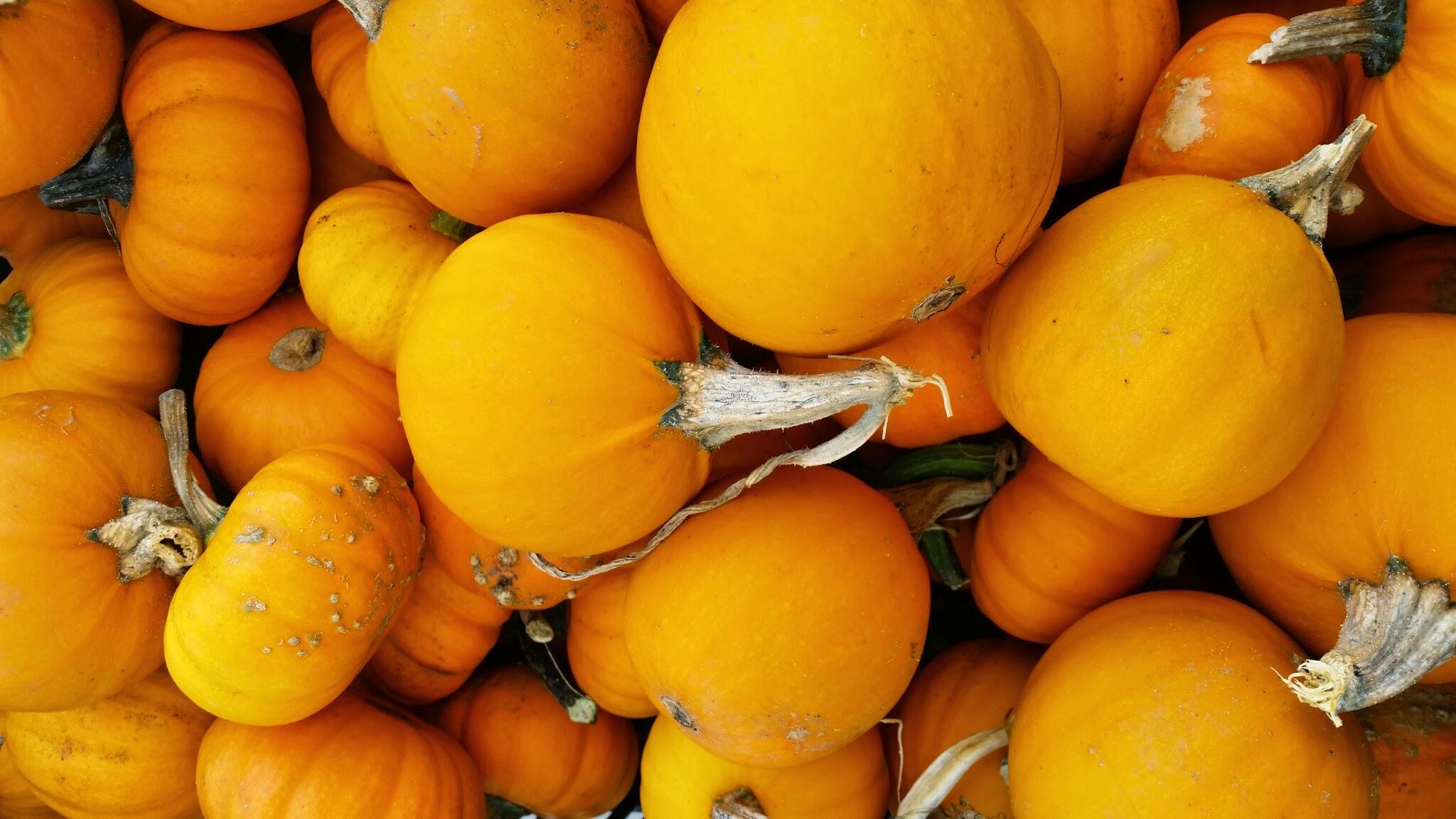 Beautiful pumpkins at the Grand Army Farmer's Market in Brooklyn.
