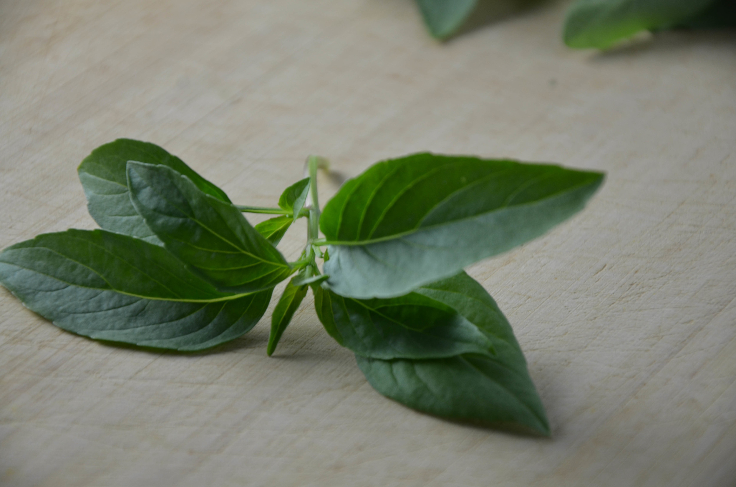 Close up Thai Basil