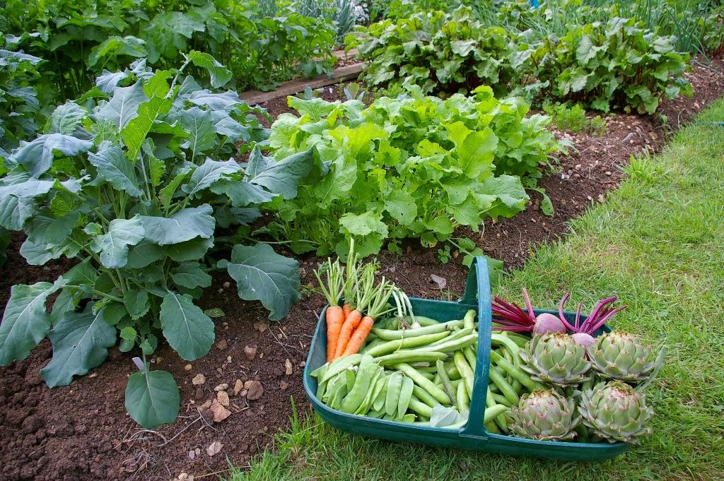 Vegetable+Garden.jpg