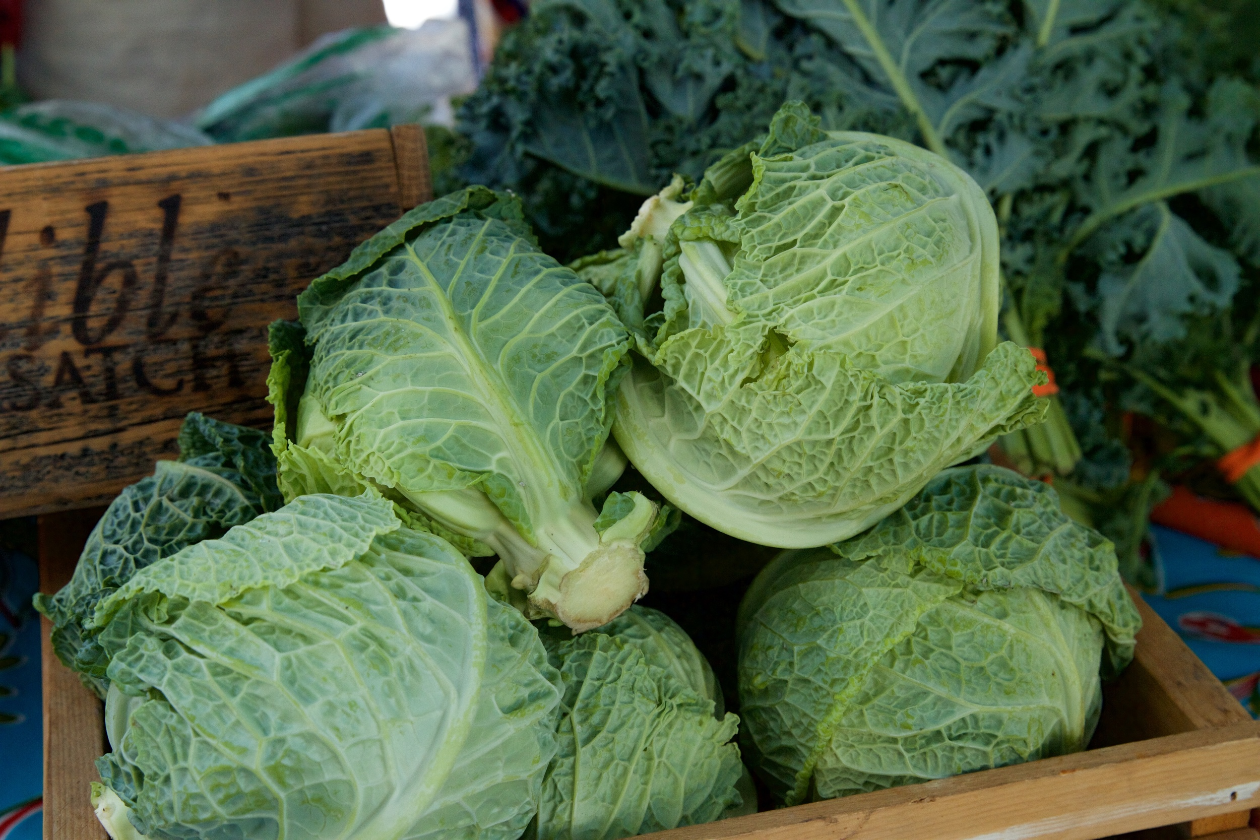Image of  BUG Farms  cabbage