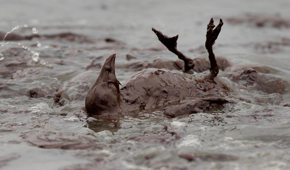 400px-Bird_in_oil_spill.jpg