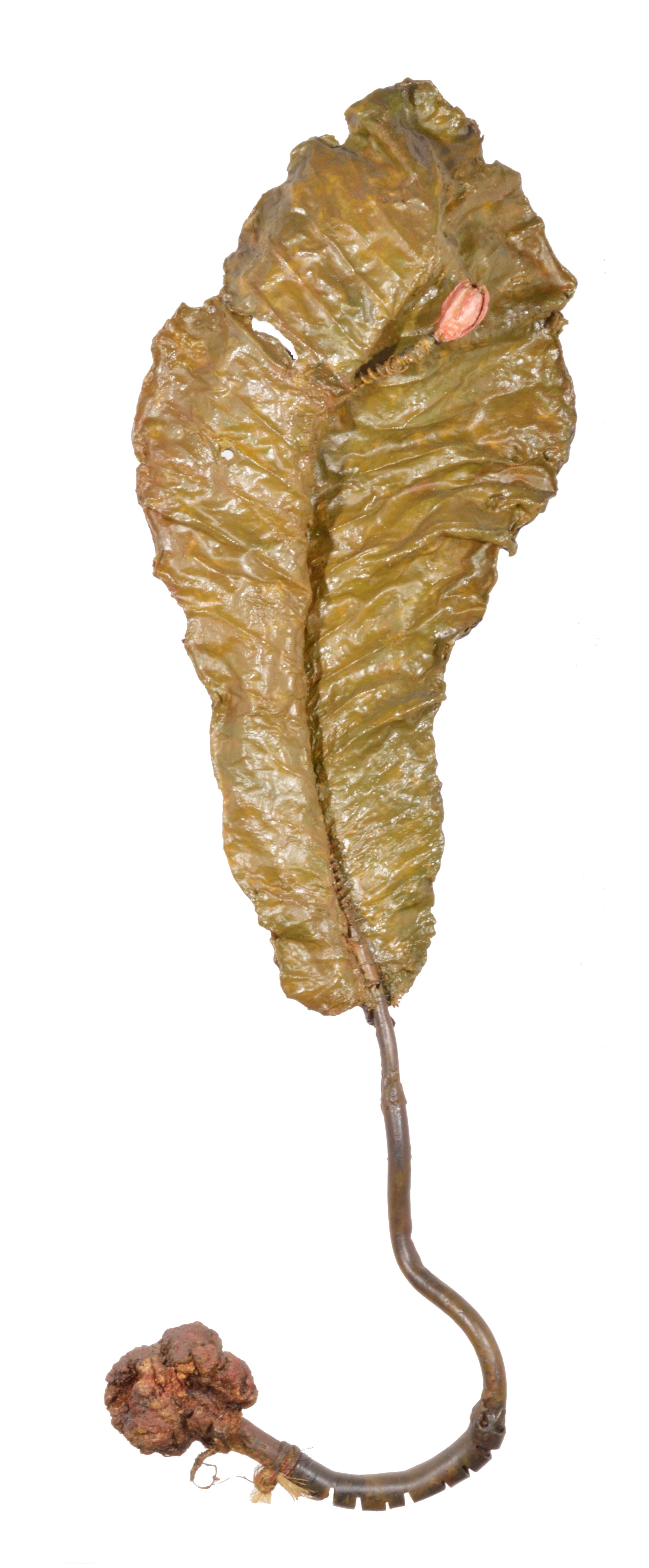 Budding Leaf 2005