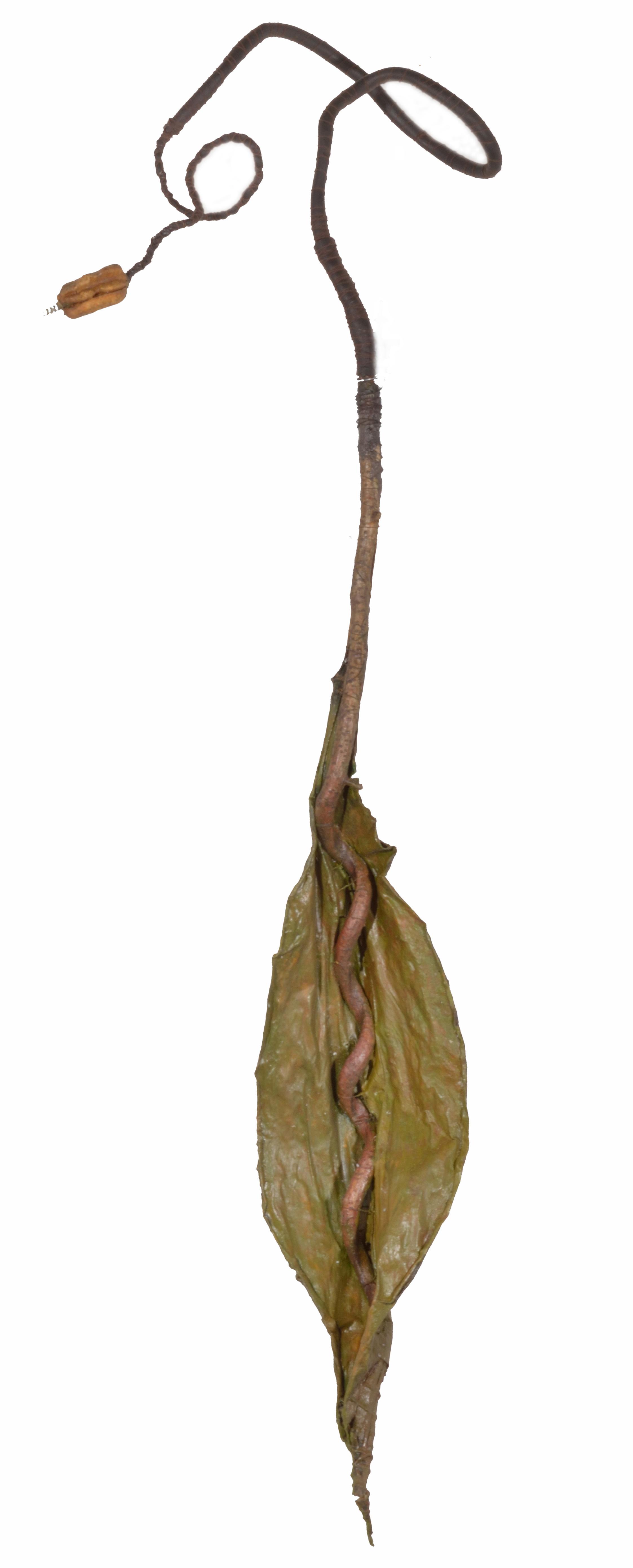 Vine Leaf 2009