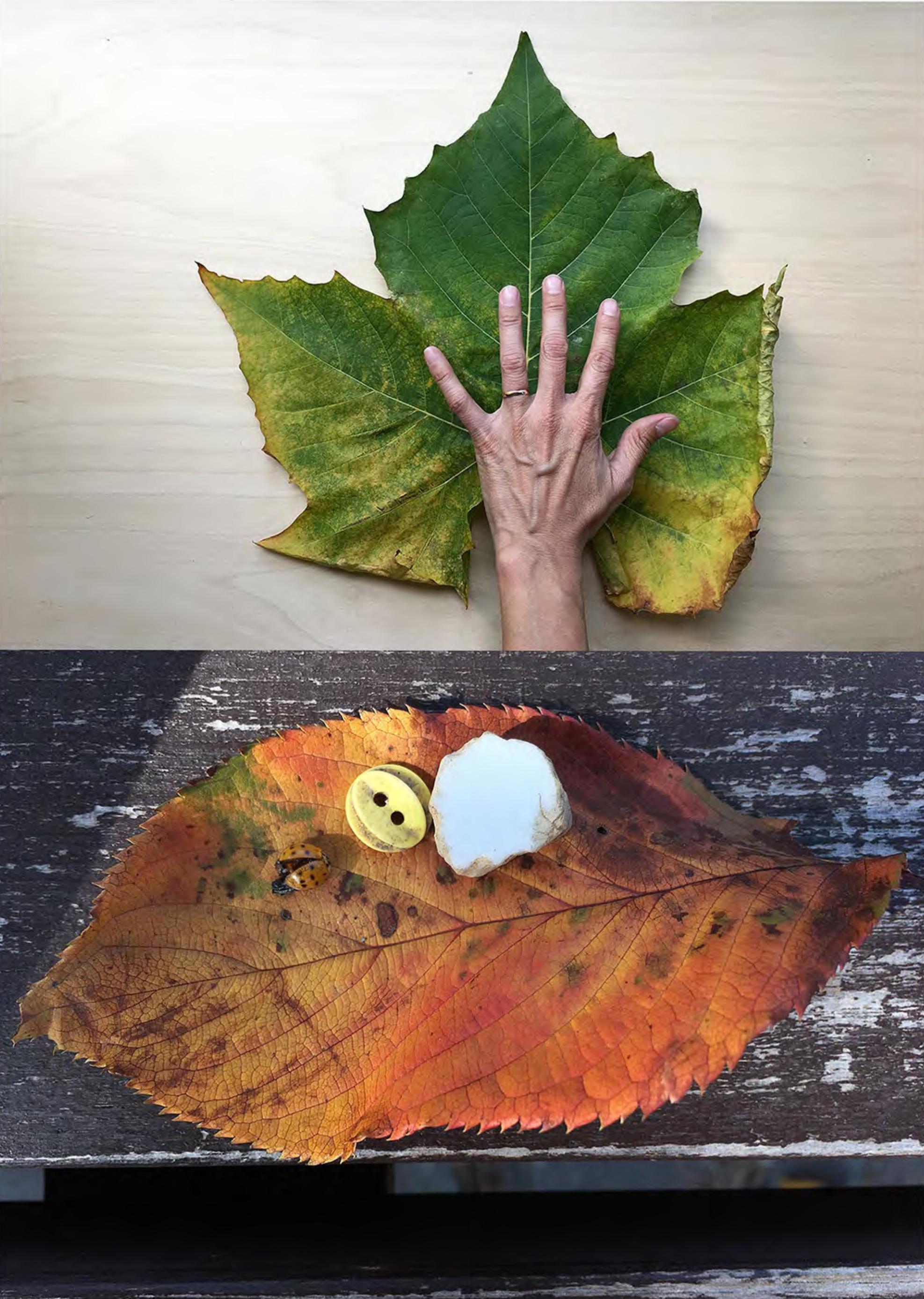 Copy of Hand leaf (Seoul), 2017