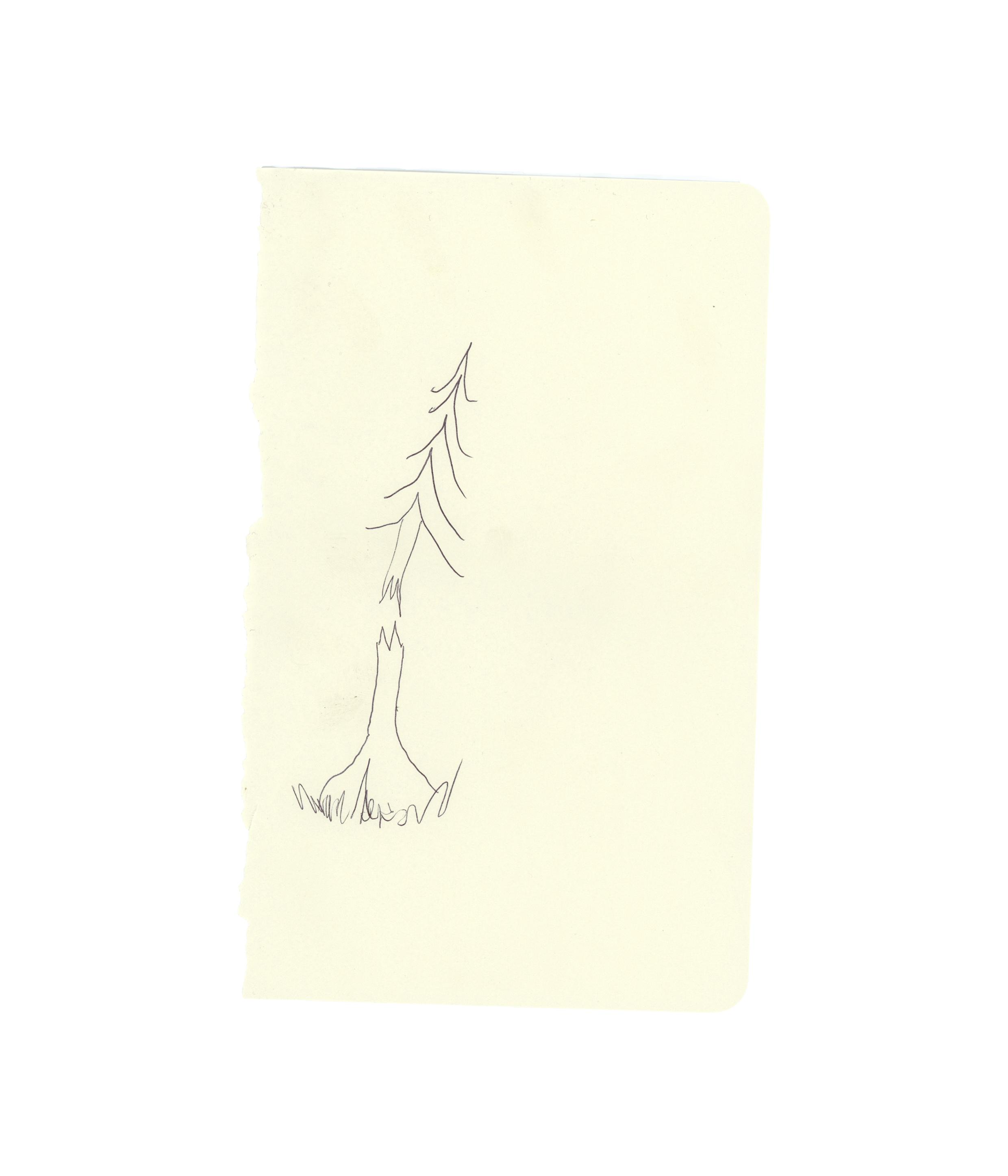 Pine drawing No. 3 - Taz