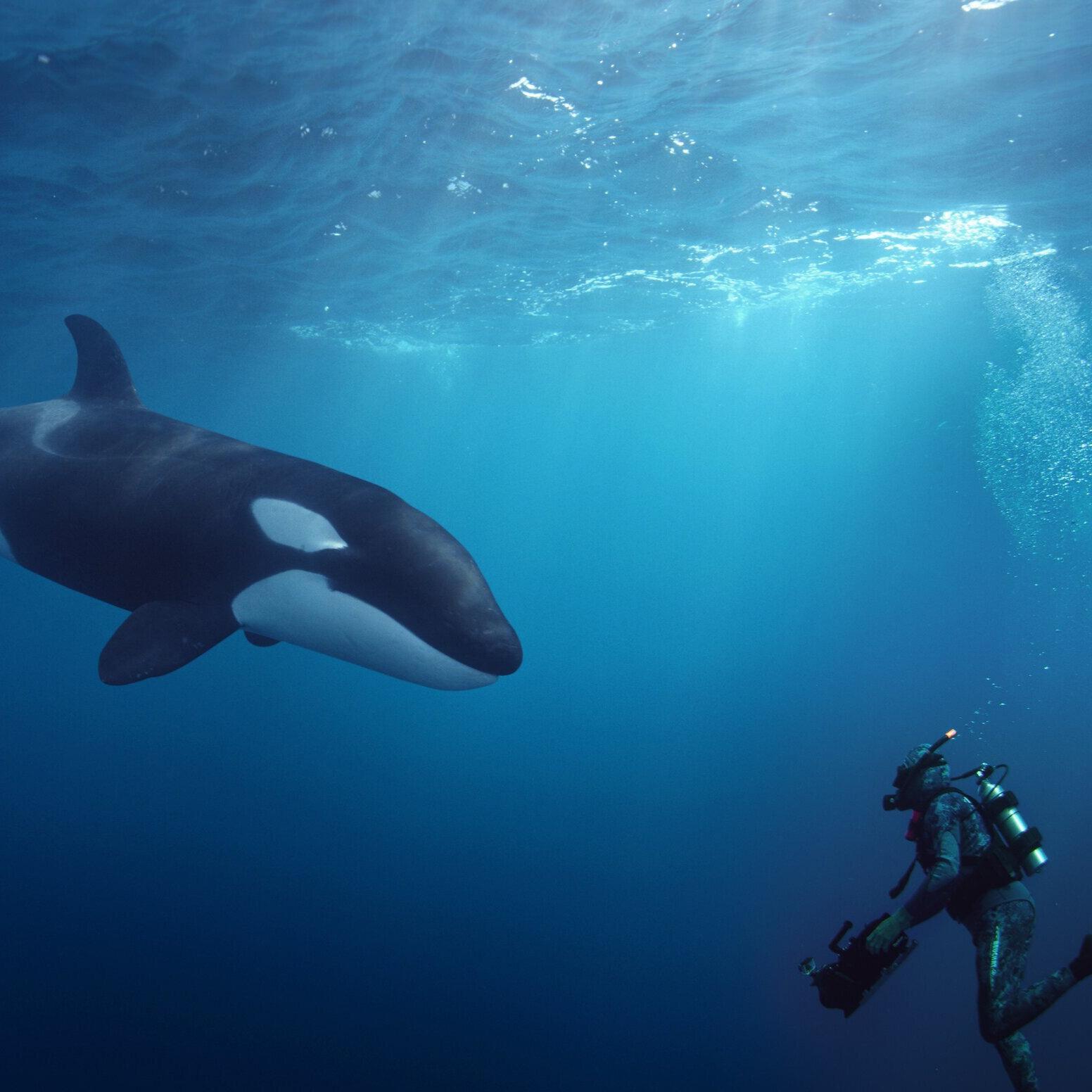 Orca Comp(1) copy.jpg