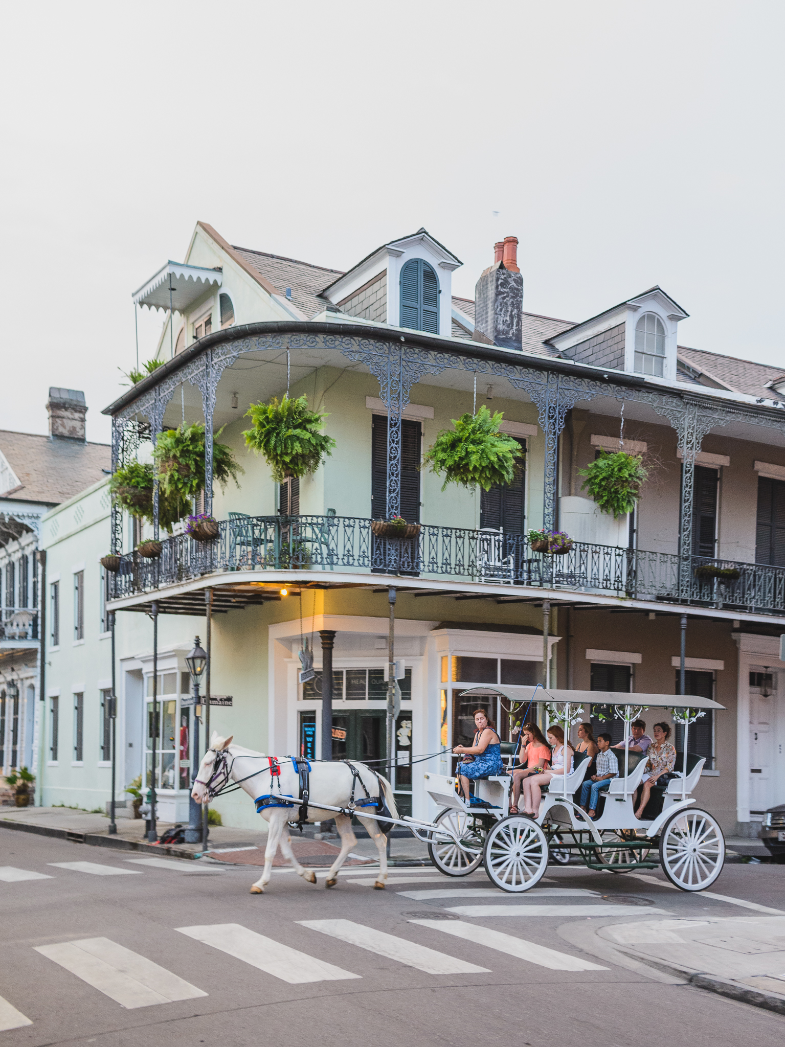 Whale Bicyclist in New Orleans