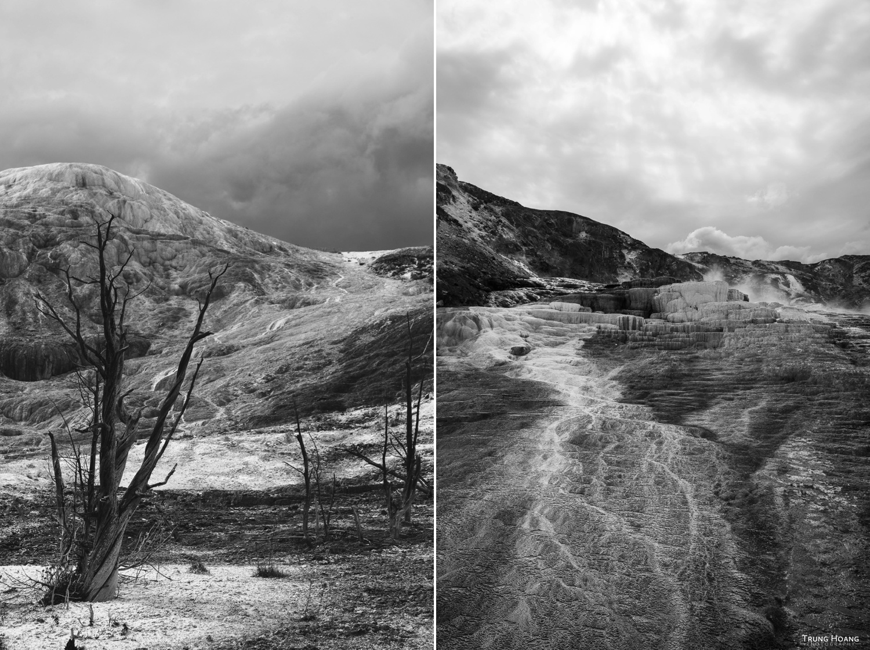 Petrified Trees of Mammoth Hot Springs