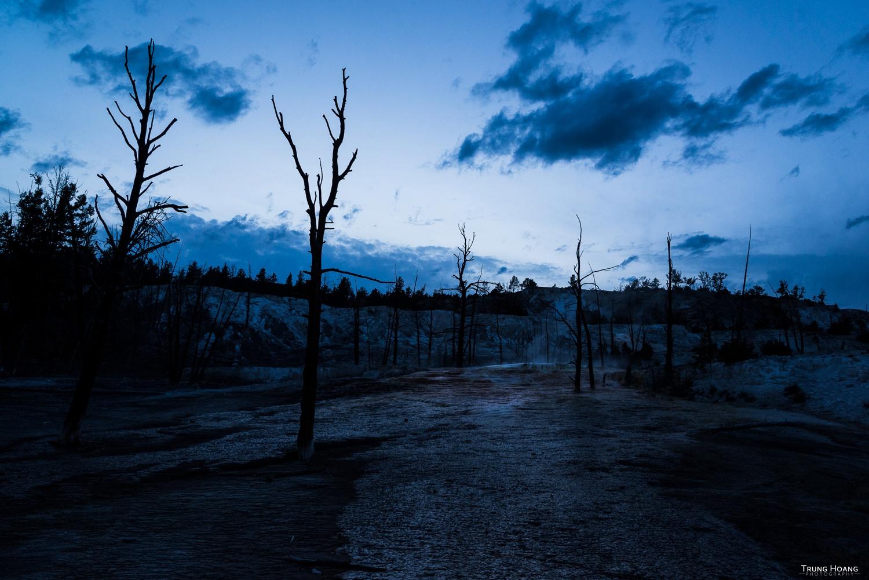 Mammoth Hot Springs Petrified Trees at Dusk