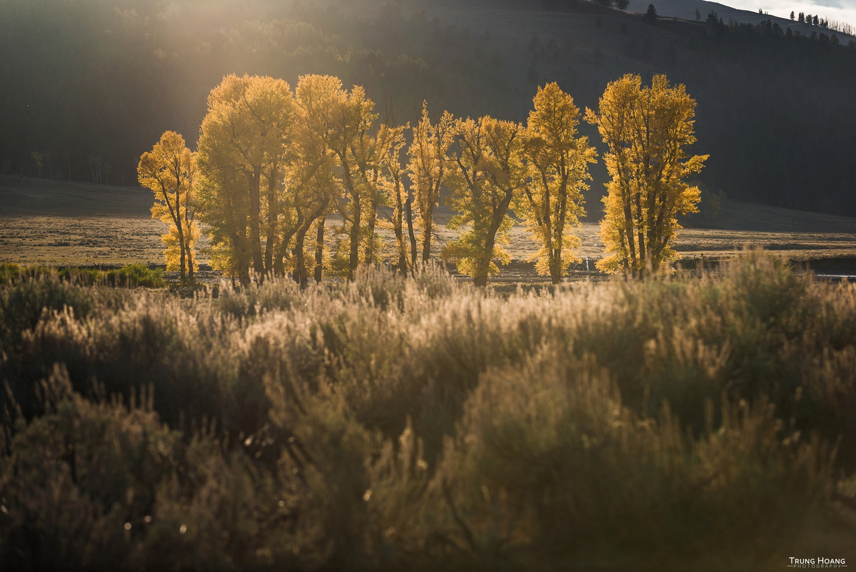 Fall Colors in Yellowstone