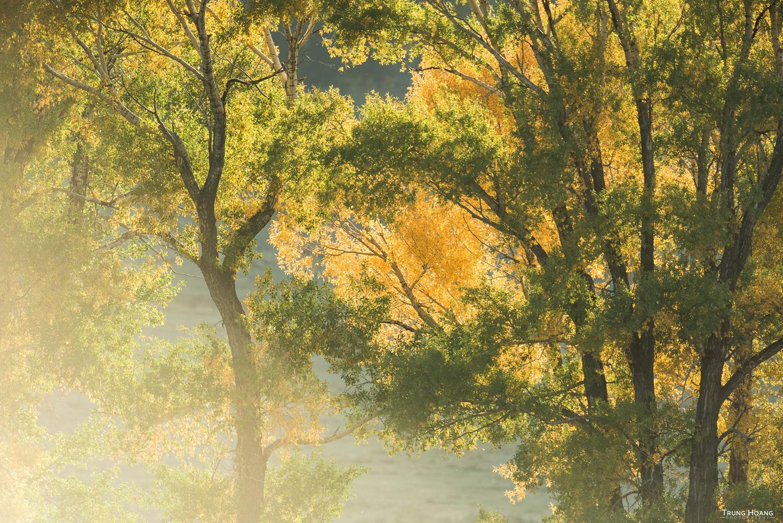 Beginning to Turn, Fall Colors in Yellowstone