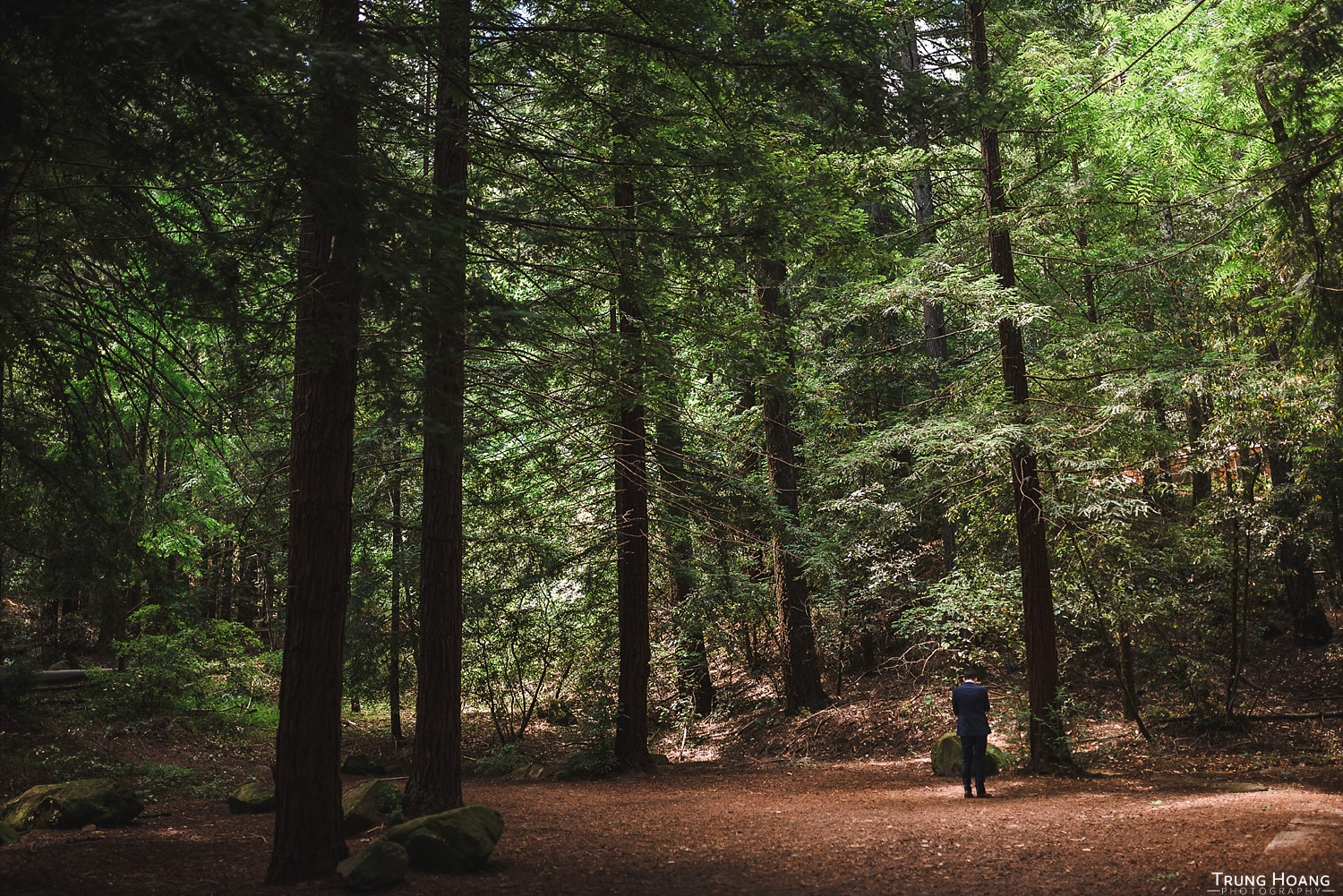 Redwood forest first look