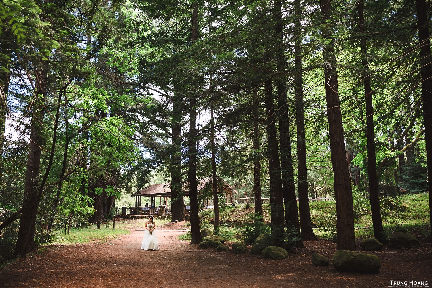 Bride first look Redwood forest