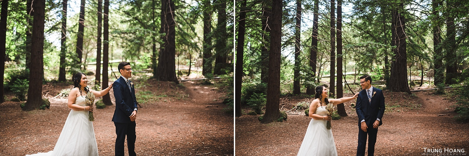 First look in redwood forest