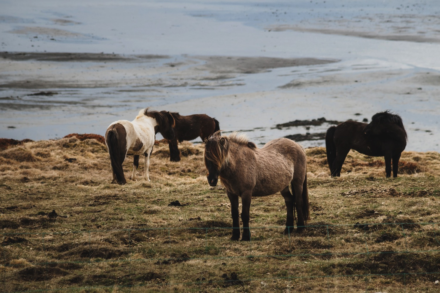 Icelandic Horses - Iceland Blog Part II