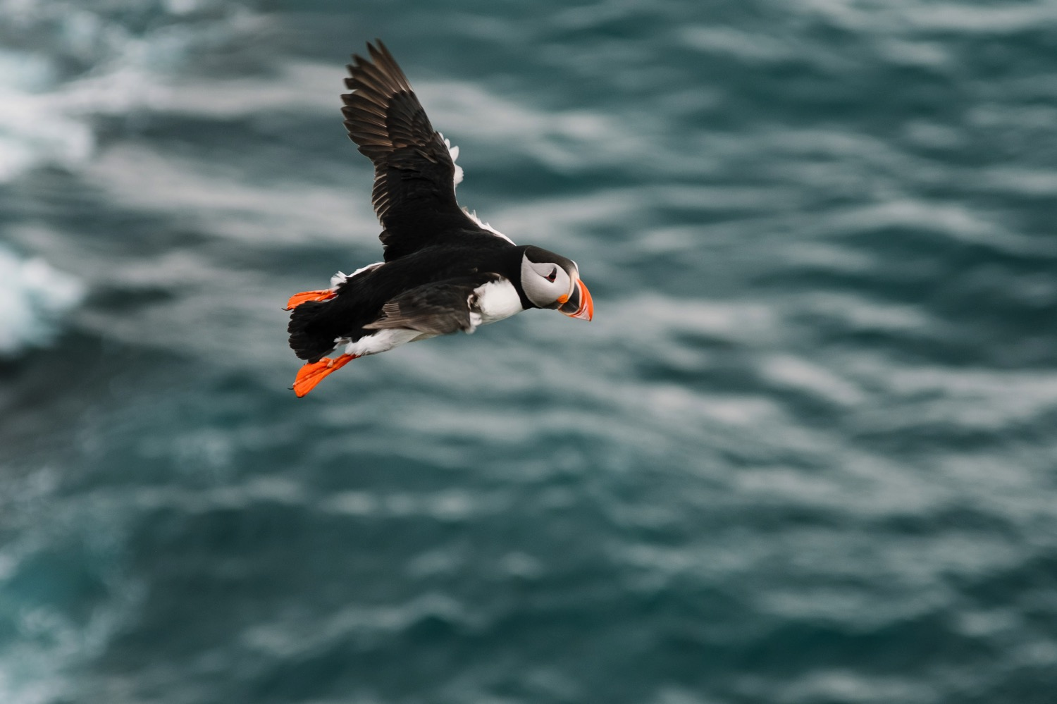 Flying Puffin - Iceland Blog Part IIPhoto by Trung Hoang Photography |www.trunghoangphotography.com | San Francisco Bay Area Wedding Photographer