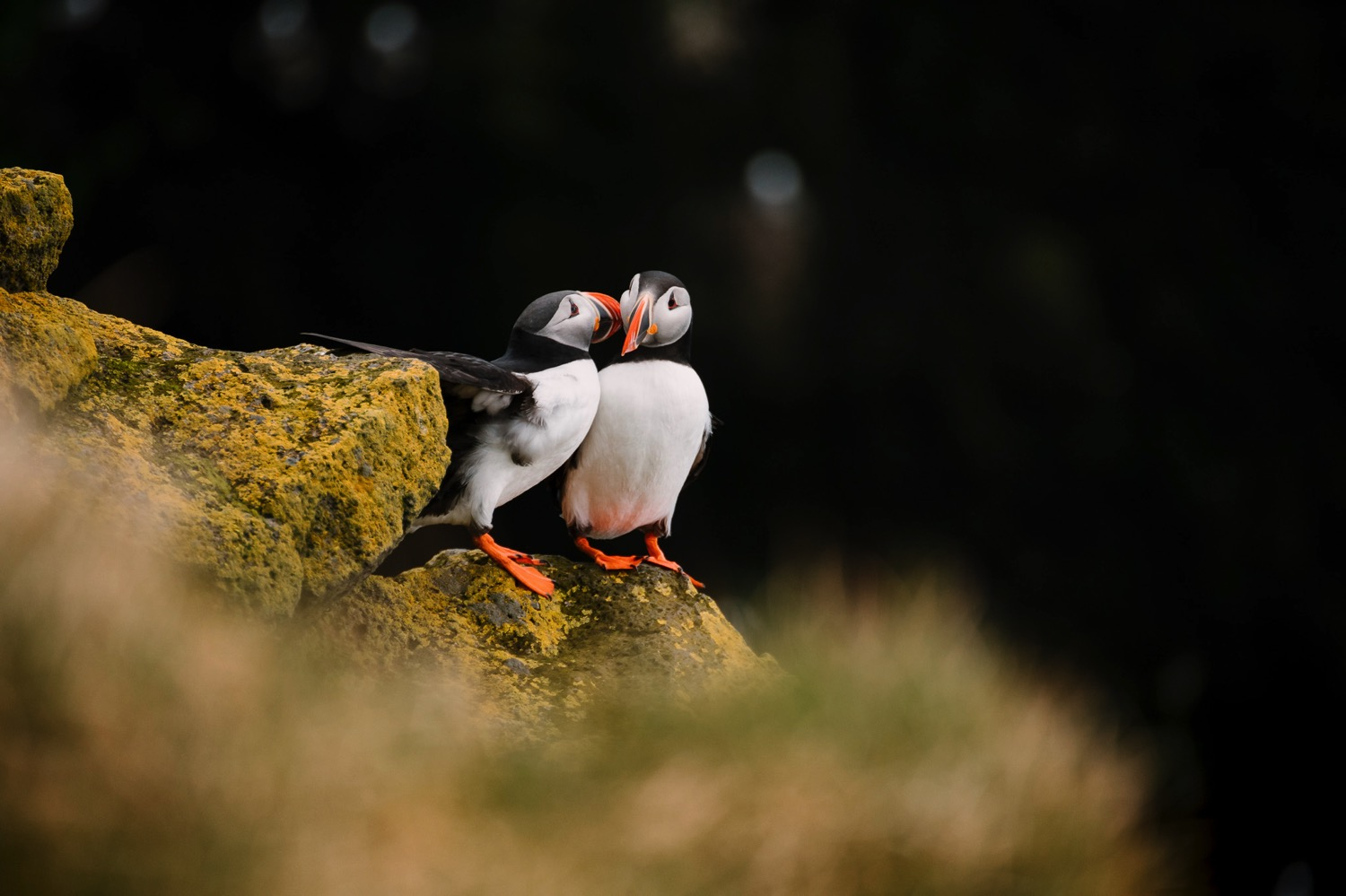 Cuddling Puffins - Iceland Blog Part IIPhoto by Trung Hoang Photography |www.trunghoangphotography.com | San Francisco Bay Area Wedding Photographer
