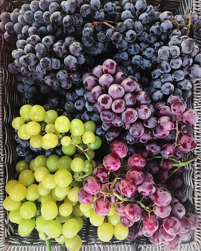 yes yes and yes 🍇 #local #grapes #farmdirect #inseasonnow #f52farmstand #urbanradish