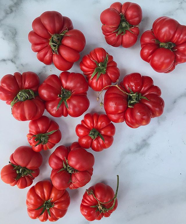 costoluto genovese tomatoes aka the best tomatoes for making sauce. still hanging onto every last bit of summer we can...🍅🍅🍅 #cagrown #costolutogenovese #inseasonnow #urbanradish