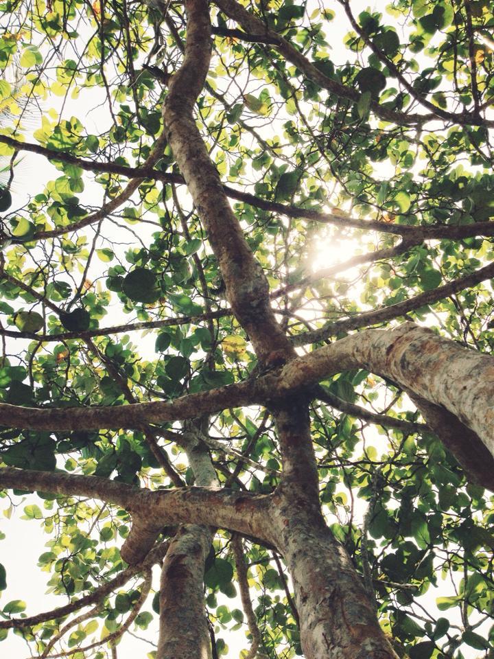 PV_trees.jpg
