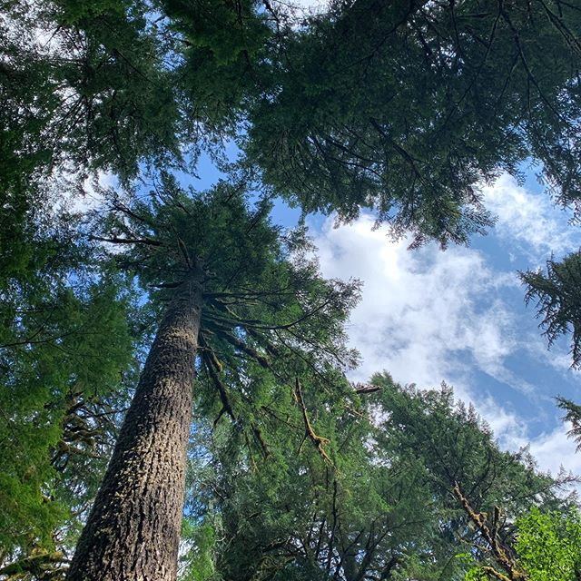 Look up ⬆️👀#oregon #photooftheday #adventure #bittenescapes #travel #nature #hikingadventures #hike #travelphotography #trees #instagood #summer #naturephotography