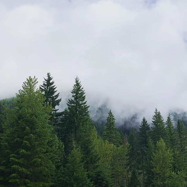 Cloudy days ☁️ #bittenescapes #photooftheday #nature #summer #oregon #instagood #hiking #hike #oregonhikes #mthood #travel #photography #naturephotography #travelphotography #ig #adventure #tree #explore