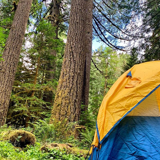 Waking up to a view 🌲#blogger #bittenescapes #photooftheday #travelphotography #oregon #mthood #travel #summer #instagood #adventure #hiking #trees #hike #oregonhikes #camping #tent