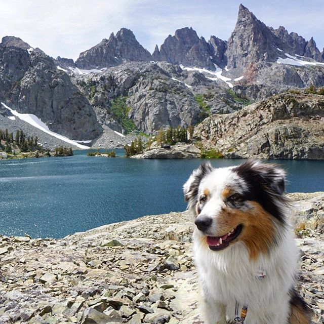 Hiking along the Minaret Lake Trail (21 km). A little long but worth it for the views 😍  #hiking #hikingadventures #minaretlake #inyonationalforest #adventure #nature #photooftheday #travel #roadtrip #westcoast #california #instagood #instadaily #summer #travelgram #aussiesofinstagram