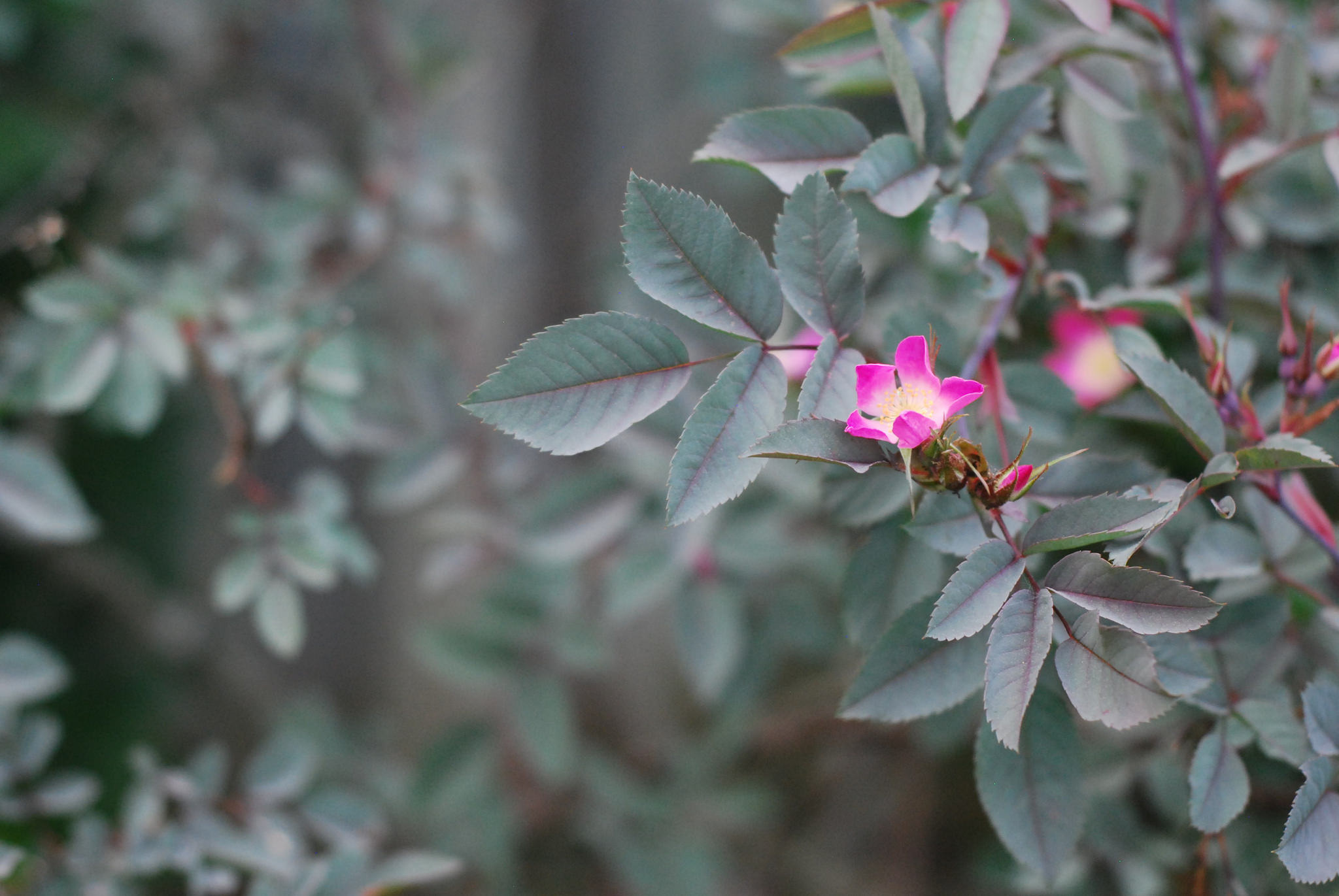 Garden Blooms 2