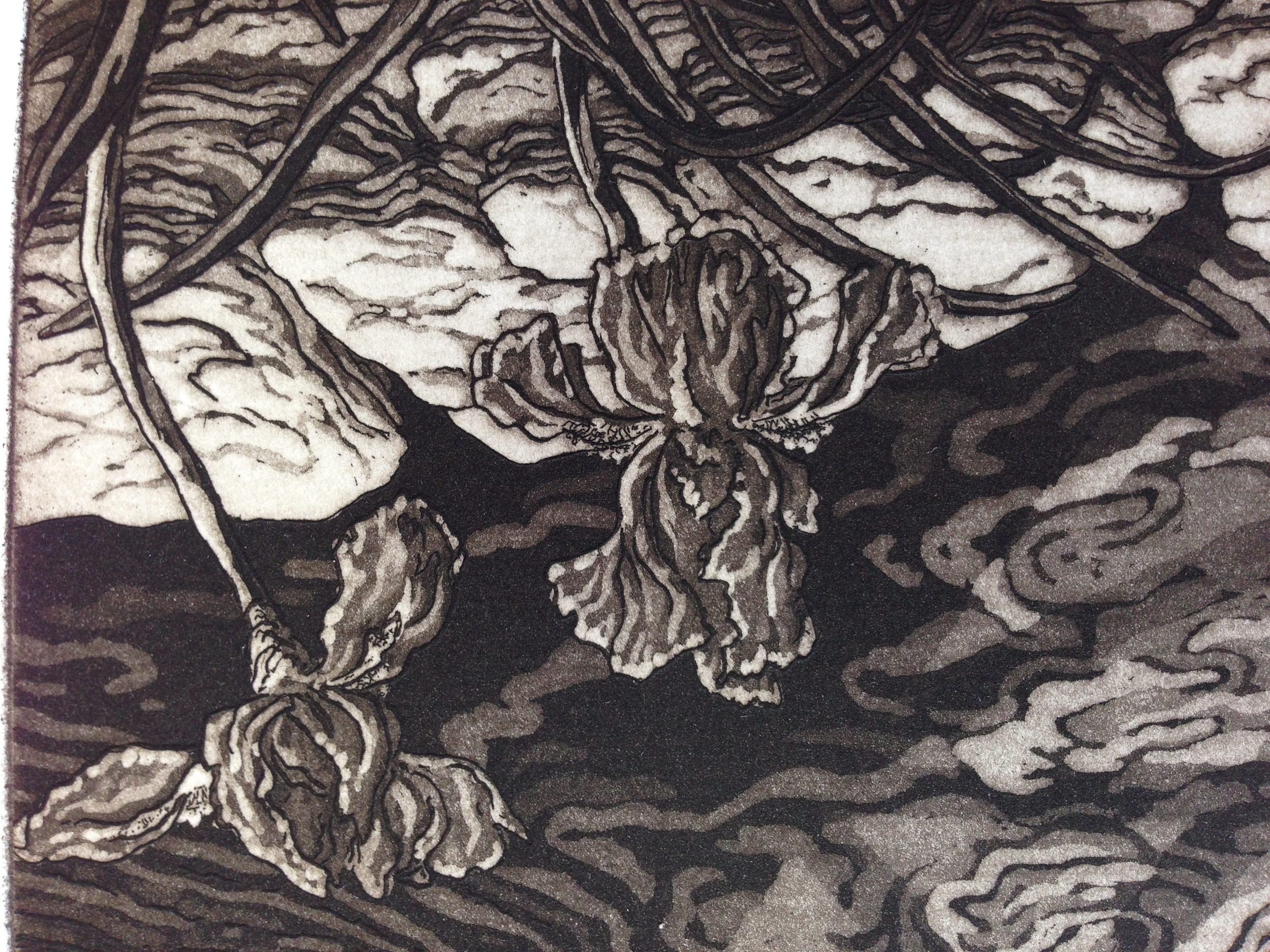 A detail shows six or seven different aquatint tones and textures. Very nice work by Jennifer Melby.