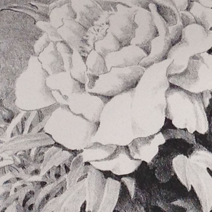 A detail of one of the big peonies in the foreground of the print. The limestone had been grained with #180 grit carborundum to provide a slightly coarse drawing surface.