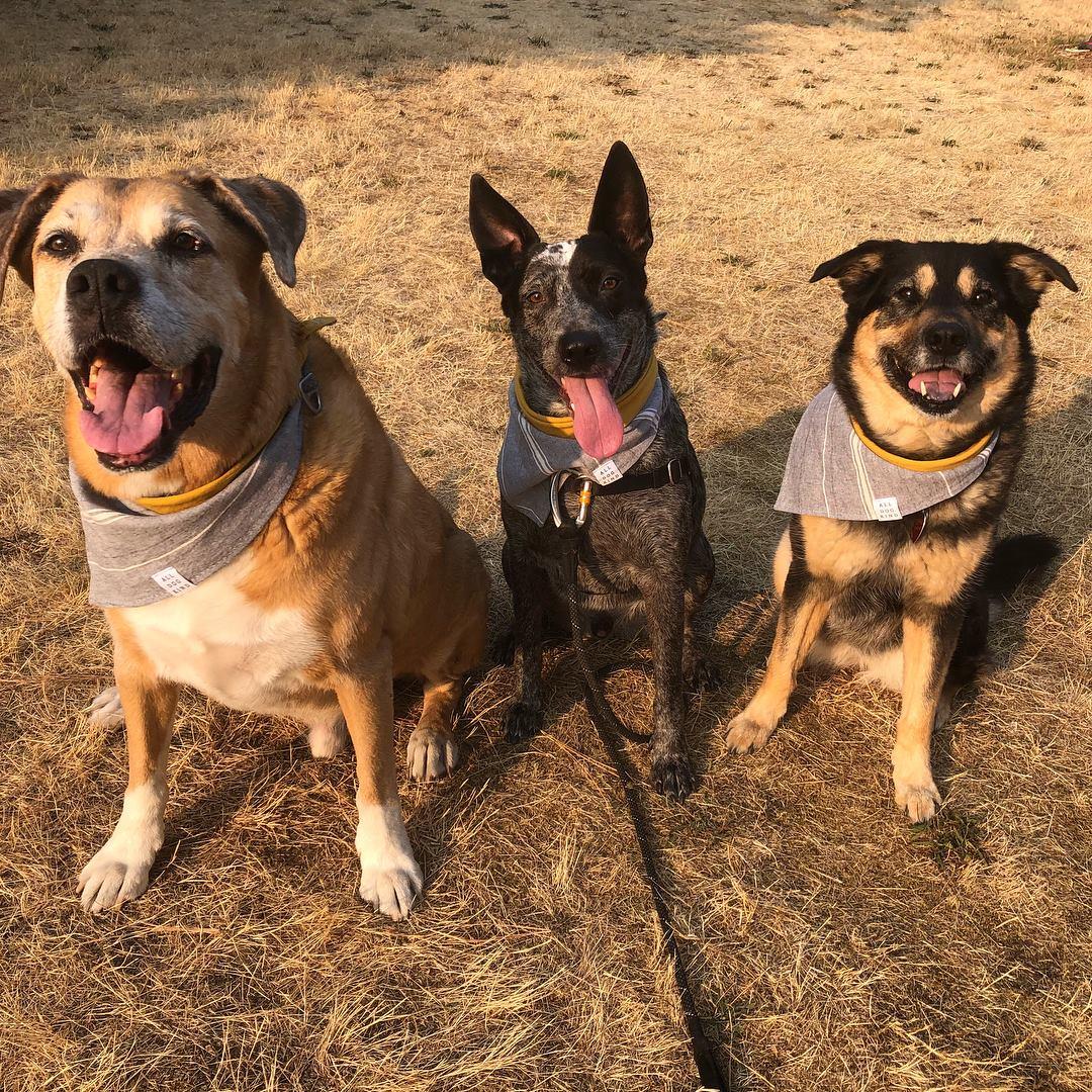 Jack, Gus and Sophie