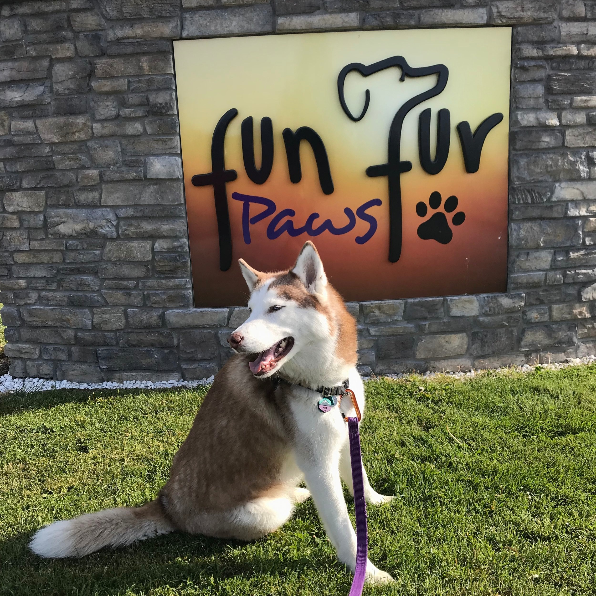 Fun+Fur+Paws+3.jpg