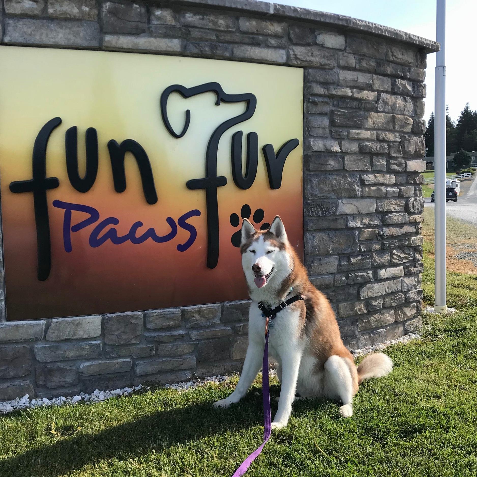 Fun+Fur+Paws.jpg