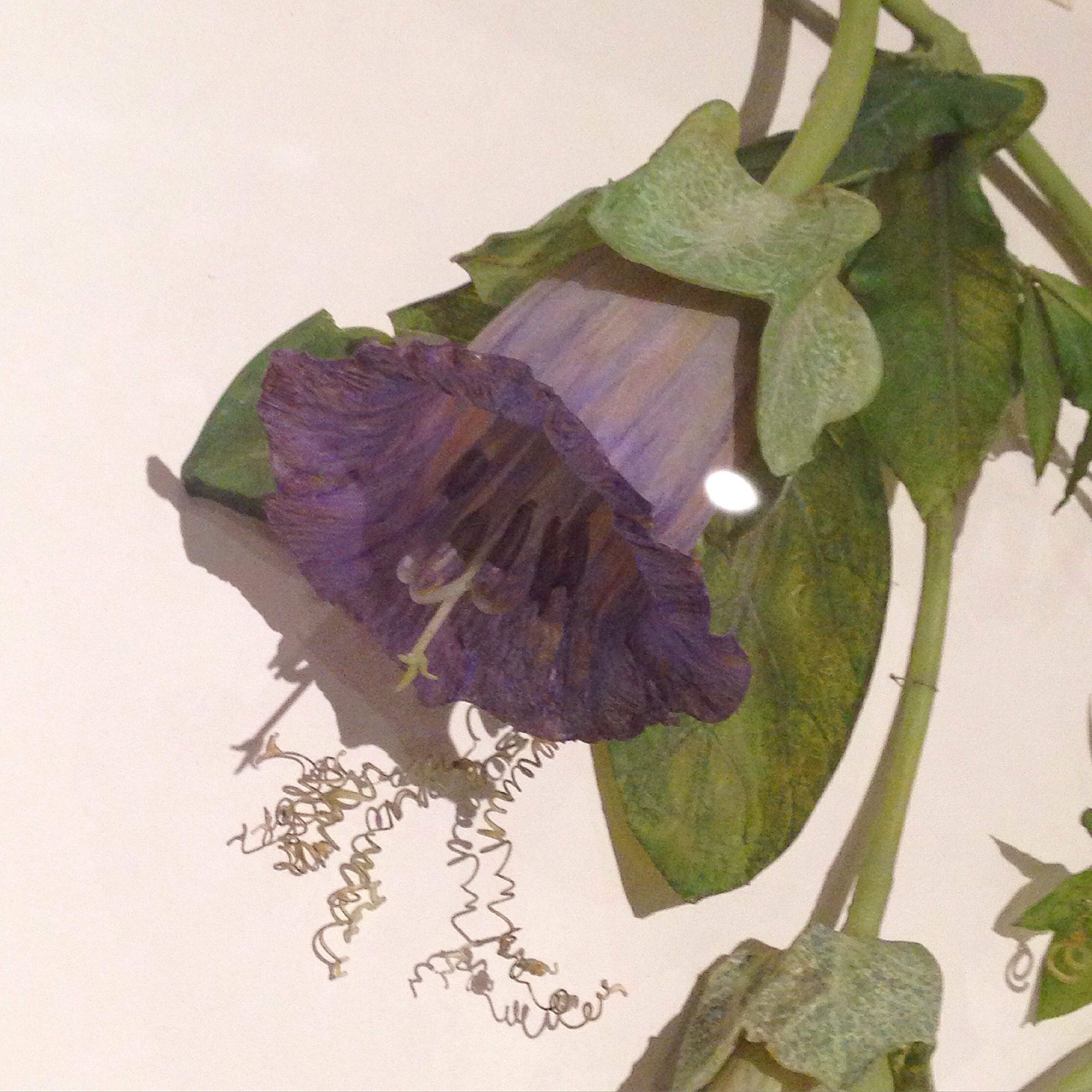 One of the lovely glass flowers seen on my visit.