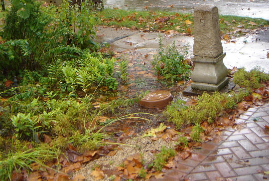 A rain garden keeps water on your land
