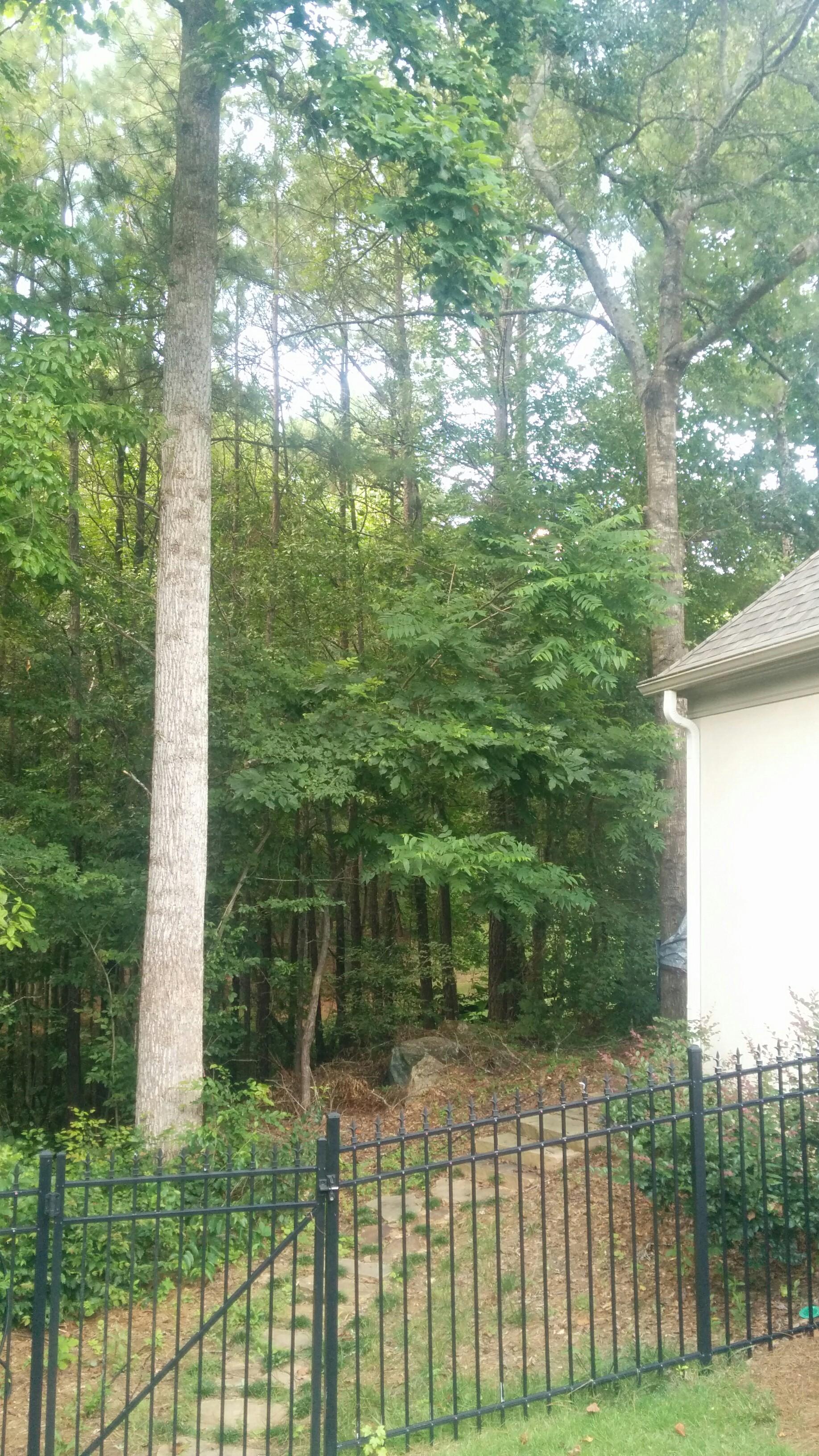 Tree & brush clearing