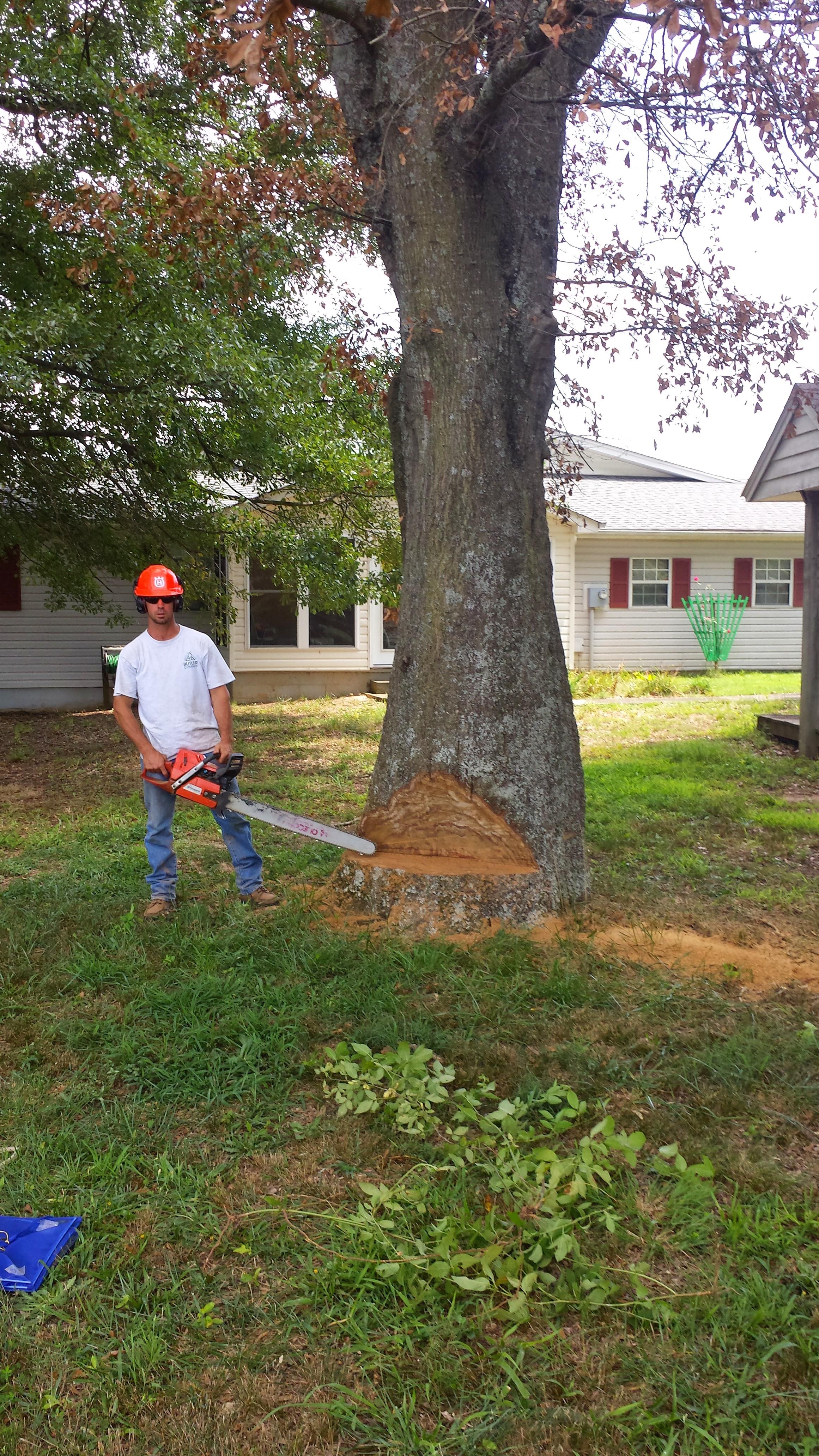 Aaron large tree during 2.jpg